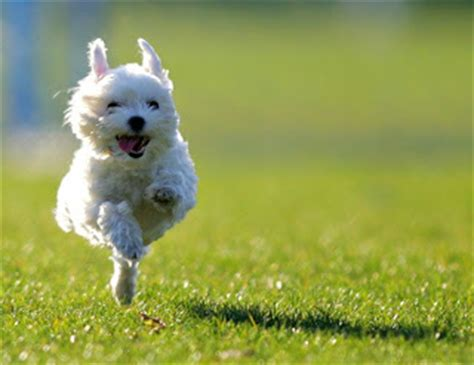 las fotos mas alucinantes perro corriendo