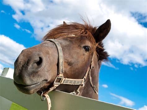 horse face het horses prey paard gezicht predators van een wonderopolis vraagteken op met funny