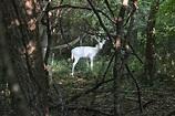 The Ghost Deer @ Tifft Nature Preserve – Buffalo Rising