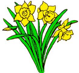 Image result for daffodil clip art