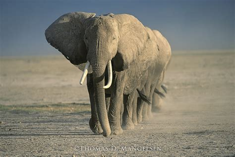 amboseli crossing legacy reserve collection