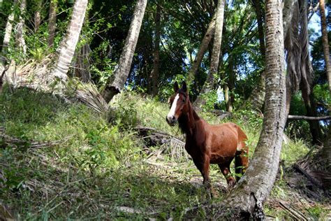 huka horse animals prey cheval ua file flee senses communication five commons horses defense safety wikimedia