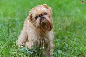 3 Quirkily Cute Dog Breeds | Pets4Homes