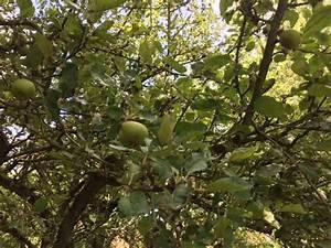 Quand Planter Un Pommier : la pomme un fruit complet ~ Dallasstarsshop.com Idées de Décoration