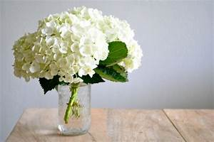 Kleine Weiße Vasen : zimmer und gartenpflanzen gegen negative energie ~ Michelbontemps.com Haus und Dekorationen