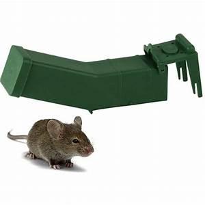 Mäuse Fangen Ohne Falle : m use mit einer tierfreundlichen mausefalle lebend fangen m use fangen und danach im wald ~ Markanthonyermac.com Haus und Dekorationen