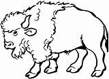 Buffalo Coloring Animals Bison Wildlife Clip Printable Clipart Animal Native Oklahoma Bear sketch template