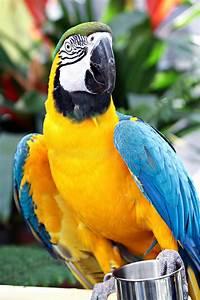 Oiseau Jaune Et Bleu : perroquet jaune et bleu photo stock image du oiseau 18127134 ~ Melissatoandfro.com Idées de Décoration