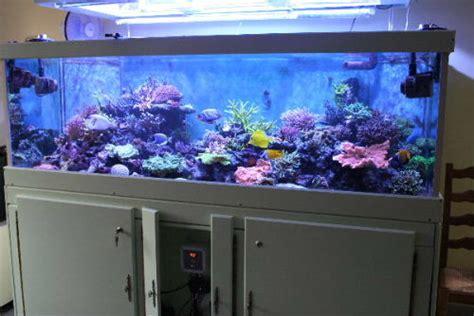 aquarium 500 litres occasion l 233 volution du bac de brunols aquarium r 233 cifal aquarium marin aquarium eau de mer reefguardian