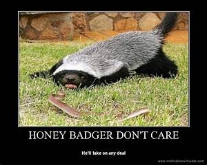 [Image - 739640] | Honey Badger | Know Your Meme