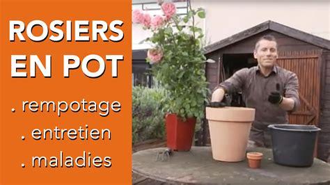 planter un rosier en pot comment s occuper d un rosier en pot entretien rosier chroniqueur jardin franck prost