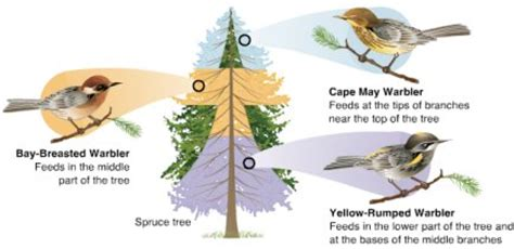 Evolution Vs Natural Selection
