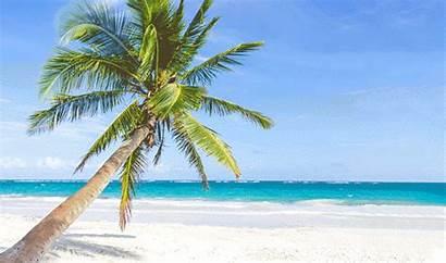 Island Hawaiian Cat Ranch Beach Tropical Palm