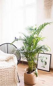 Pflegeleichte Pflanzen Für Die Wohnung : die besten zimmerpflanzen f r die wohnung pflegeleichte ~ Michelbontemps.com Haus und Dekorationen