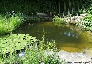 Teich Und Garten : gartenteich anlegen teil 1 erste planungen garten haus xxl garten hausxxl ~ Frokenaadalensverden.com Haus und Dekorationen
