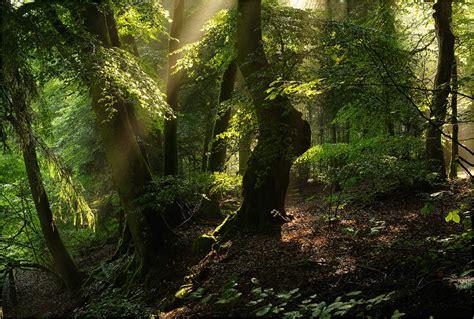maerchenwald forum fuer naturfotografen