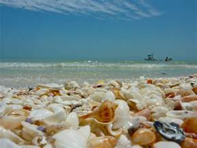 Shells On Sanibel Island