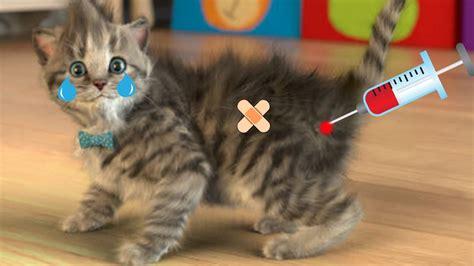 pet care  kitten play fun cat games  baby