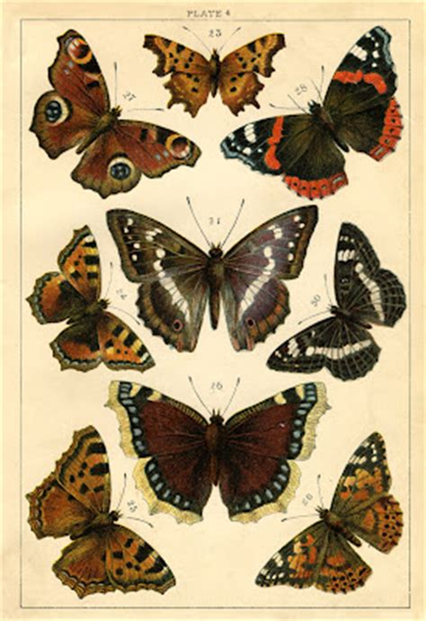 instant art printable antique butterflies  moths