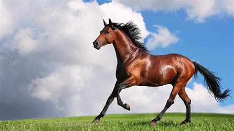 horse wallpapers hd move running horses run arabian definition awesome birds animals different