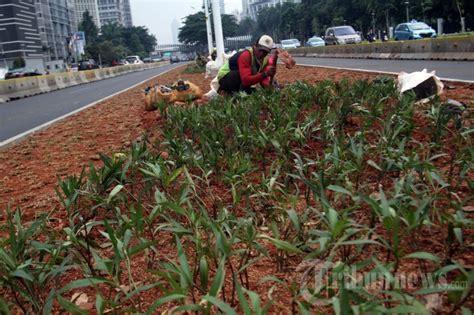 tanaman hiasi jalan jakarta foto
