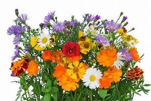Welche Blumen Blühen Im Oktober : bouquet von blumen die im herbst haben bis oktober lebte stockfoto colourbox ~ Bigdaddyawards.com Haus und Dekorationen