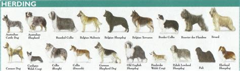 dog breed groups explained american kennel club
