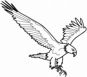 Disegno eagle aquila animali da colorare