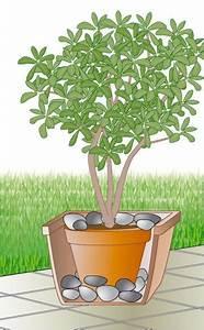 Kuebelpflanzen Fuer Terrasse : windschutz f r k belpflanzen k belpflanzen k belpflanzen topfpflanzen terrasse und ~ Orissabook.com Haus und Dekorationen