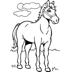 top   printable horse horse coloring pages