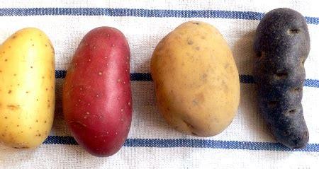 recette cuisine marmiton a chaque patate sa cuisine pommes de terre