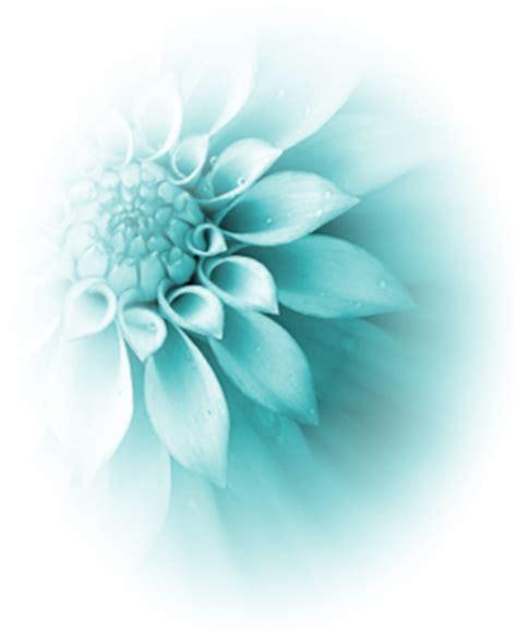 foto de Image Turquoise flower psd78764 png Animal Jam Clans
