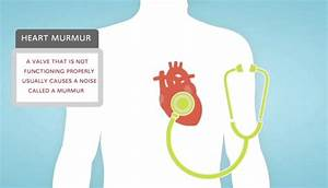 Heart Murmurs And Valve Disease
