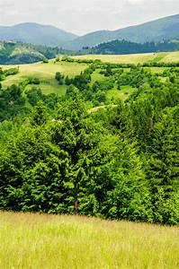 Summer, Mountain, Landscape, Green, Hills, And, Trees, In, The