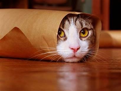 Cat Funny Wallpapers Hidden