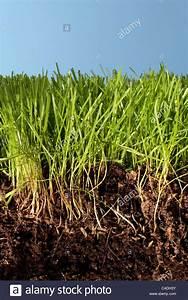 Erde Für Rasen : boden rasen wurzeln und blauer himmel in nahaufnahme ~ Lizthompson.info Haus und Dekorationen