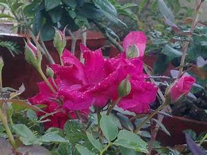 Plants Growing In My Potted Garden.: Growing and Caring ...