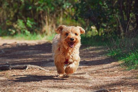 11 labākie suņu velosipēdu grozu pārskati 2021 [Dog on a Bicycle] - Vekyto