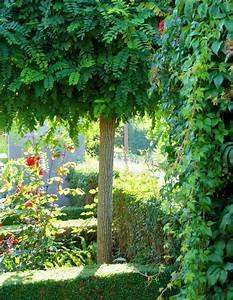 Himmelbett Für Garten : kugelbaum f r kleinen garten ~ Michelbontemps.com Haus und Dekorationen