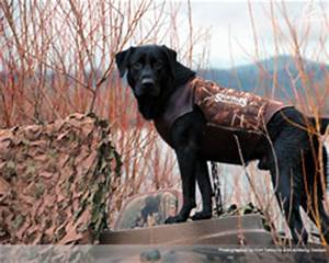 Ducks Unlimited Dog Wallpaper | www.pixshark.com - Images ...