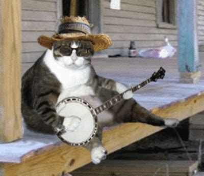 mixing bluegrass banjo cat approves mixing