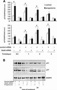 Stat6 Mediates The Induction Of P21 And P27 Gene