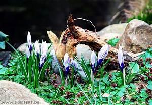 Was Sind Frühlingsblumen : bilder fr hlingsblumen der fr hling bringt eine bunte blumenpracht zum vorschein kostenlose ~ Whattoseeinmadrid.com Haus und Dekorationen