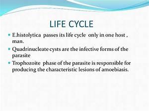 ppt on Entamoeba histolytica INTESTINAL LESIONS