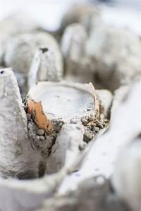 Beton Schleifen Schleifpapier : ostereier basteln mit beton betoneier als h bsche osterdeko ~ Watch28wear.com Haus und Dekorationen