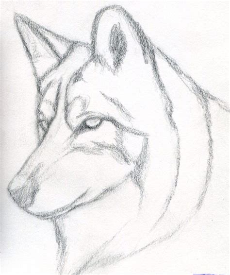 simple wolf sketch wolf drawings pinterest wolf