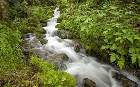Mountain Stream Water Stones With Moss Green Vegetation Hd