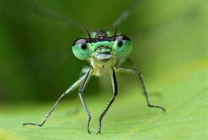 17 Best Images About Dragonfly On Pinterest