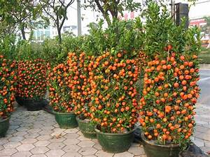 How To Grow Tangerines In Pots In 2020  With Images