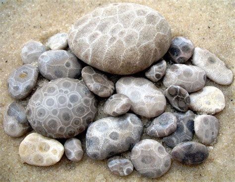 find petoskey stones petoskey regional chamber of